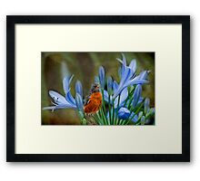 Robin in flowers Framed Print