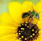 Green Bee by Beth Mason