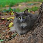 Gray Cat with Pears by cchandler