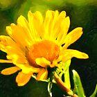 Little Suns - Golden Autumn Floral by Mark Tisdale