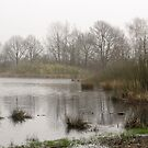 De Peel - Misty Morning by liesbeth