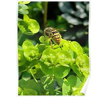 Spring Wasp Poster