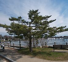Overlooking Wickford Harbor by Barry Doherty