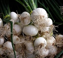 Onions  by ZWC Photography