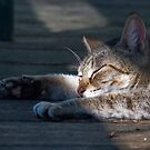 Lazy Days of Spring by Barry Doherty