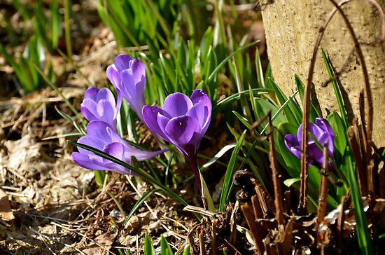 Spring Has Sprung... by Carol Clifford