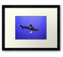 Oceanic Whitetip and Pilot Fish Framed Print
