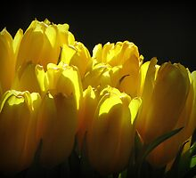Yellow by Hans Bax