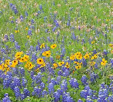 Bluebonnets, Coreopsis, and Scarlet Gaura by Navigator