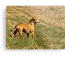 Shelby Who Sees All Metal Print