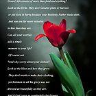 Matthew 6:25-30 by Deborah McLain