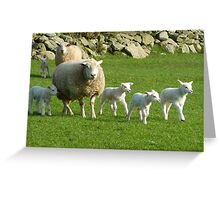 The Noise Of The Lambs Greeting Card
