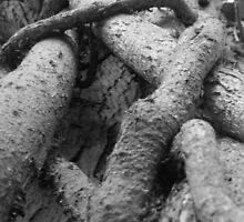 crossed roots by Perggals© - Stacey Turner