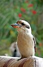 Kooka by Graeme  Hyde