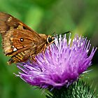 Butterfly on a flower. by Tiarne White