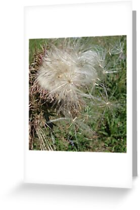 THISTLEDOWN by May Lattanzio