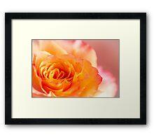 The Rose 2 Framed Print