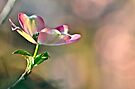Spring Has Sprung, New Life Has Finally Begun... by Ainsley Kellar Creations