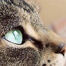 gentle gaze by thinkingoutloud