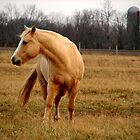 Horse, Turning its Head by Tracy Engle