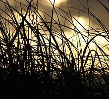 Dune Grasses at Sunrise Casuarina Beach by Jen  Hutchison