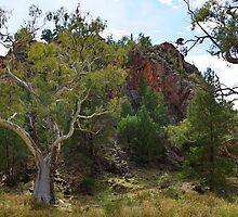 Warren Gorge - Quorn, South Australia by PC1134