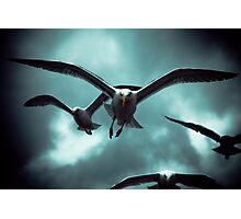 Sea Gulls - Renard Photographic Print