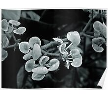 Black and White Tentacles Poster
