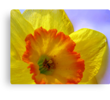 The Joyful Jonquil Canvas Print