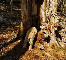 The New DOGwood Tree by Pamela Phelps