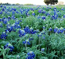 Bluebonnets at Denison Dam, Texas, USA by aprilann