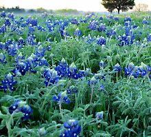 Bluebonnets at Denison Dam, Texas, USA by aprilann