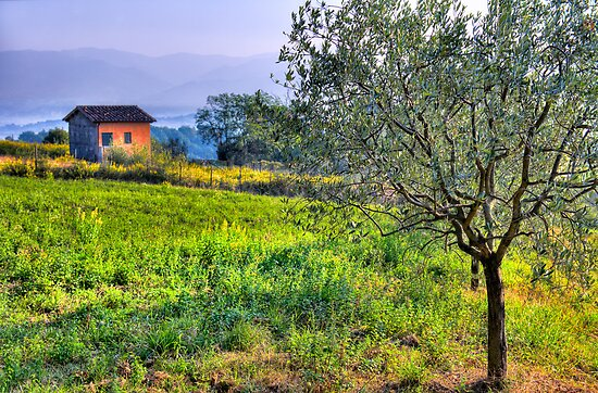 Olive Tree by Bruce Taylor