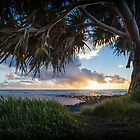 Interesting title about Pandanus Trees, Sunrise, and Grass by Daniel Rankmore