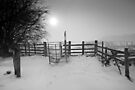 Misty Winter Walk BW by Andy F