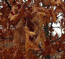 Leaves decaying away (view larger) by jammingene