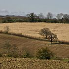 Bucklebury fields by James Taylor