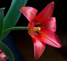 Satin Petals by Jan Cartwright