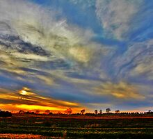 Tree Line And Sunset by EBArt