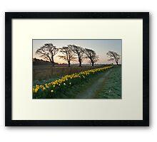 Spring Dawn Framed Print