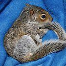 WOODY : Baby Squirrel by AnnDixon