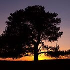 Lone Tree Sunset Silhouette by Will Corder | Photography
