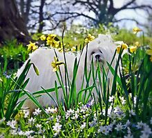 Snowdrop & The Pretty Spring Flowers by Morag Bates