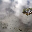 Flooded Plains!  by Anna Ryan