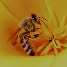 Busy bee by John E. McAlear