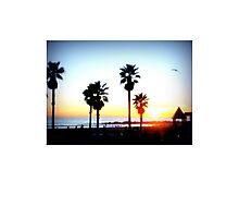 Palms Venice Beach Photographic Print
