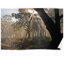 Fog in the Forest Poster