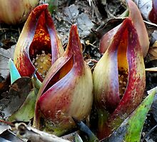 Skunk Cabbage - Spathe With Spadix  by Jean Gregory  Evans