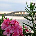 Azaleas & Halifax River Bridge by FathersWorld