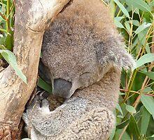 Snuggly Koala by SunshineKaren